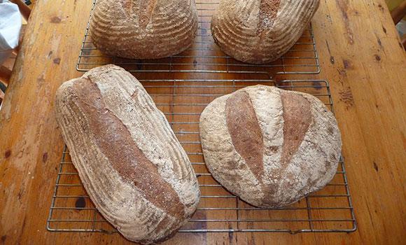 heron-bread